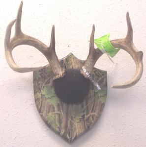 Horn & Turkey Mounts